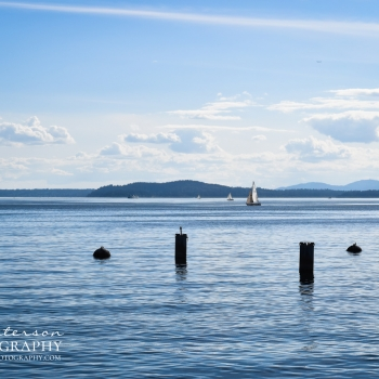 Puget Sound Sailing by MJ Peterson