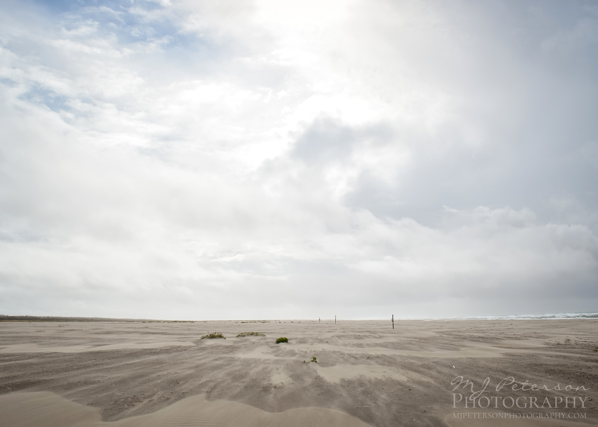 Windswept Beach in Grayland,Washington