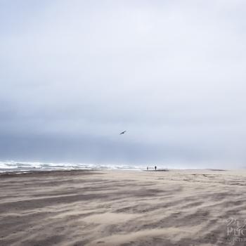 Bird in Flight over Grayland Beach