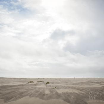 Windswept Beach in Grayland,Washington