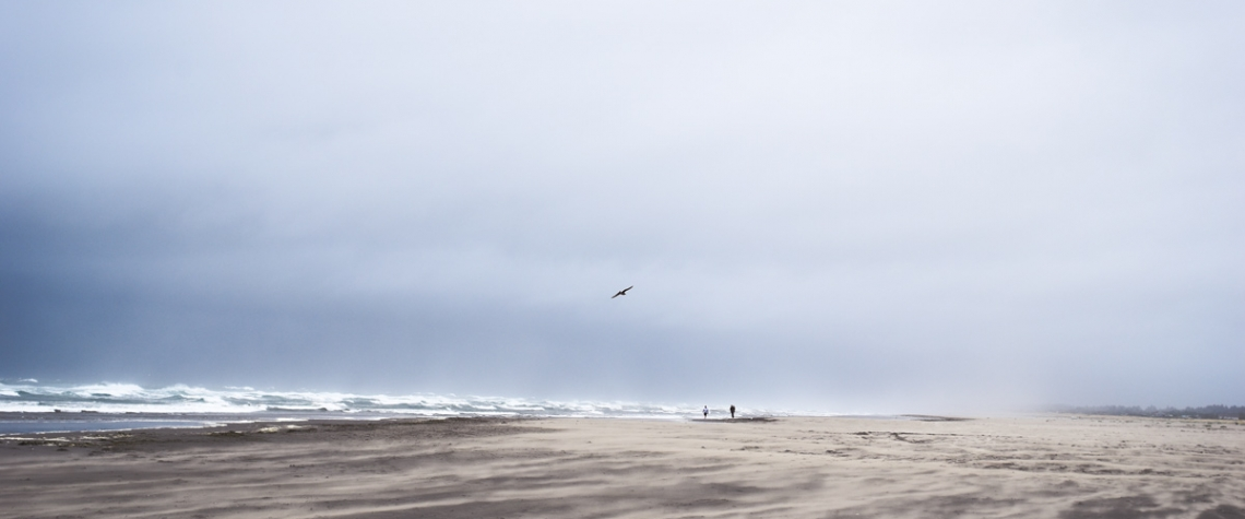 Bird in Flight Over Grayland Beach by MJ Peterson