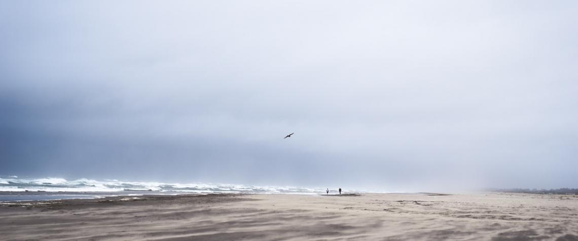 Bird in Flight Over Grayland Beach by MJ Peterson